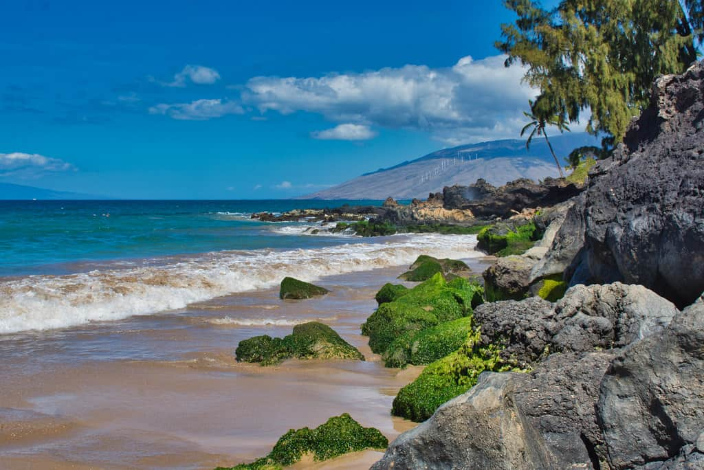 This image has an empty alt attribute; its file name is Best-Beaches-in-Maui-Charley-Young.jpg