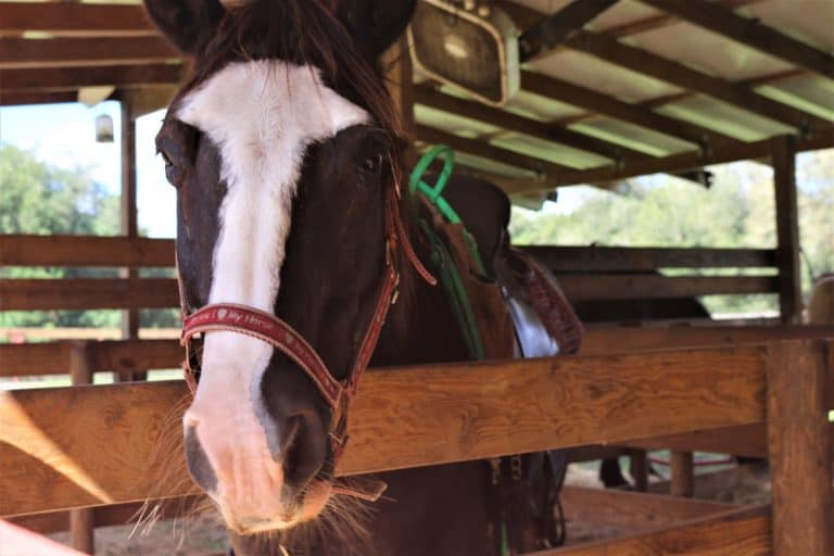 horseback riding is one of the best things to do in Ocala Florida
