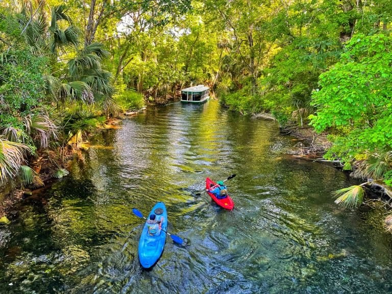 Silver Springs State Park is one of the best things to do in Ocala Florida