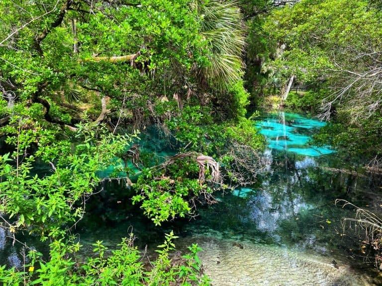 Juniper Springs in Ocala Florida