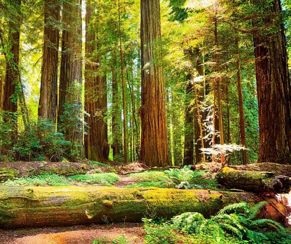 Redwood National Park is one of the best national parks in California