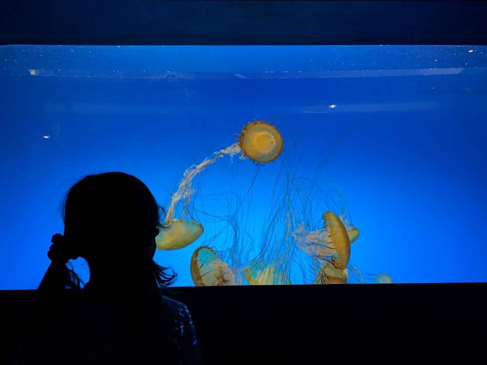 St. Louis Aquarium jellyfish