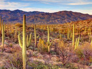 Best Arizona National Parks