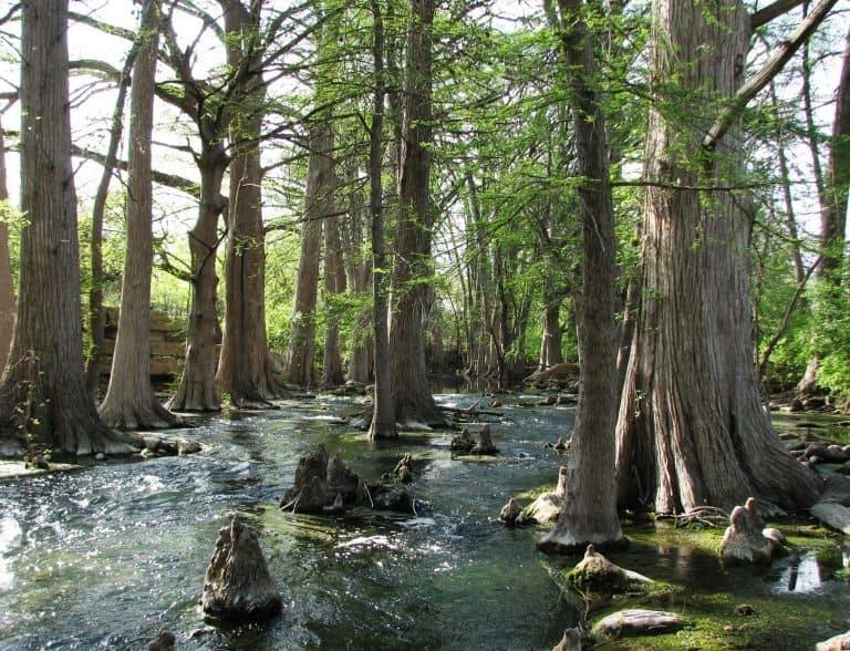 Cibolo Creek Nature Center in Boerne