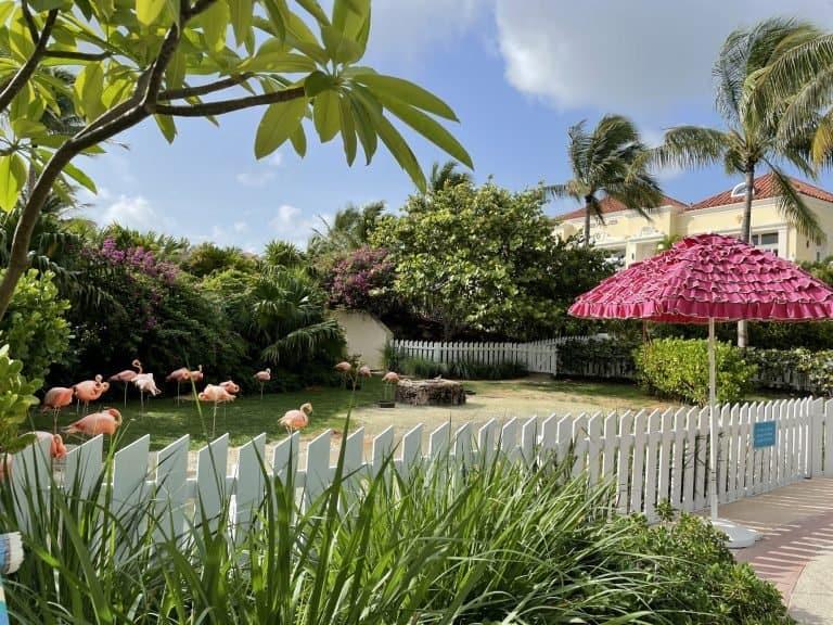 Animals-Baha-Mar-Bahamas-Family-Resort-Vacation