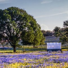 The Ultimate 5 Day Texas Hill Country Road Trip with Kids