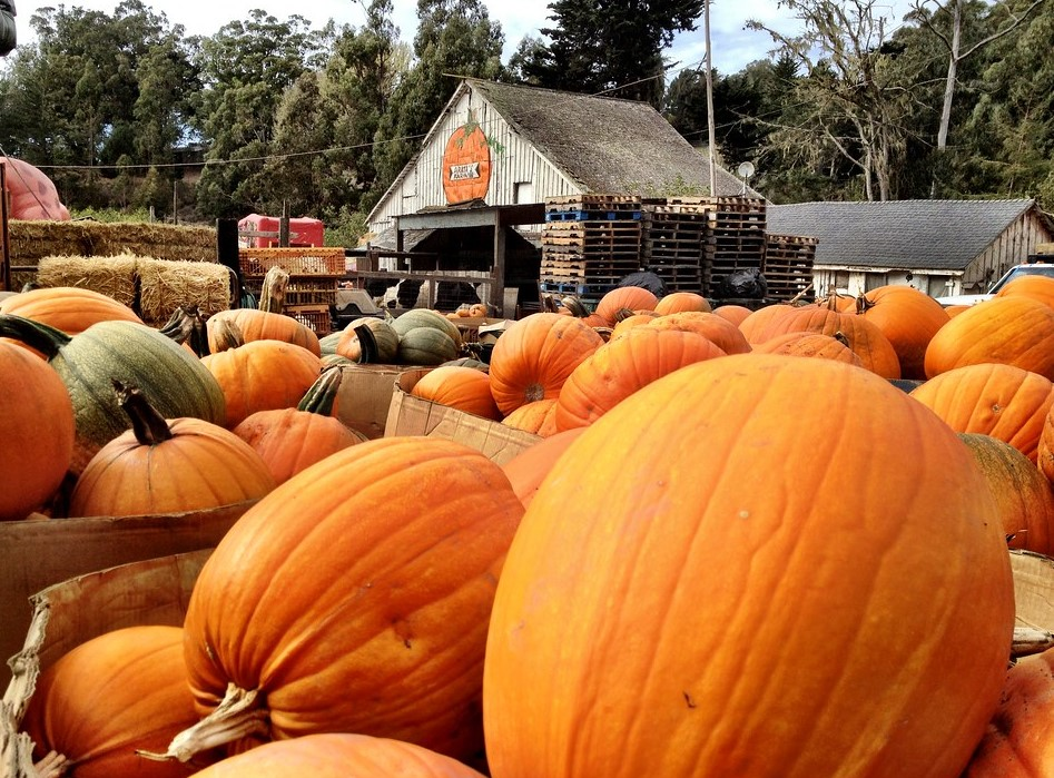 Arata Pumpkin Farm is one of our favorite pumpking farms in the Bay Area