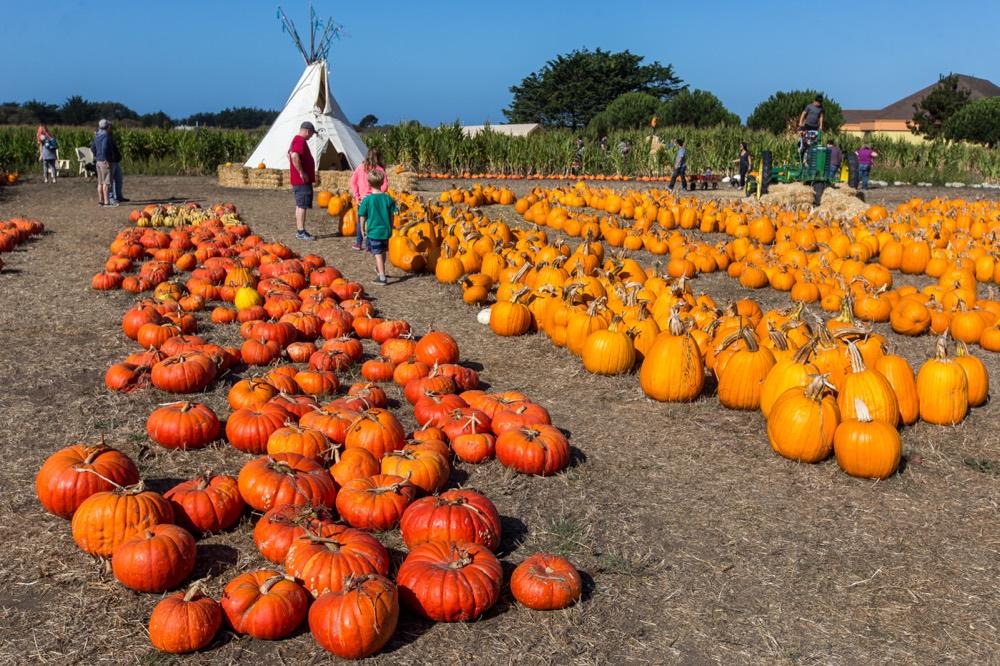 Farmer Johns Pumpkin Farm in Half Moon Bay
