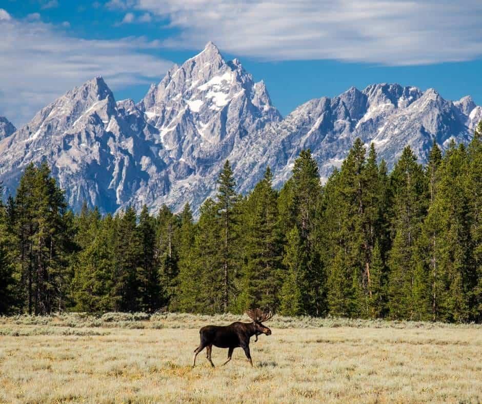 Take a wildlife safari in Grand Teton National Park