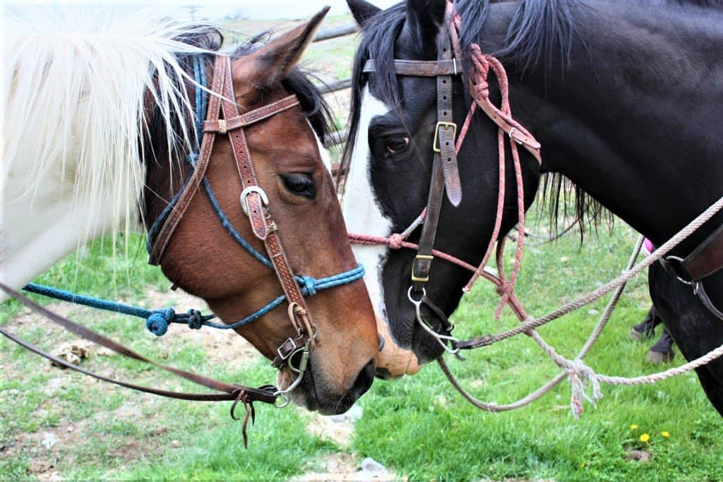 Horses near Yellowstone