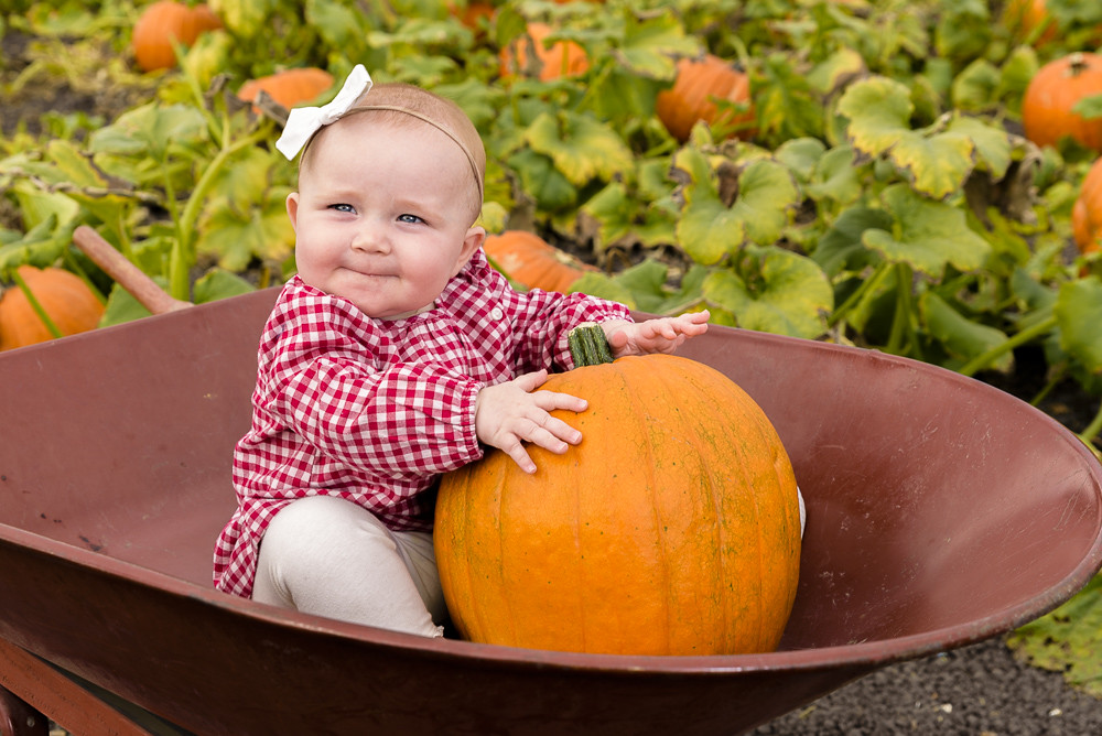 12 Terrific Pumpkin Patches in the Bay Area 2