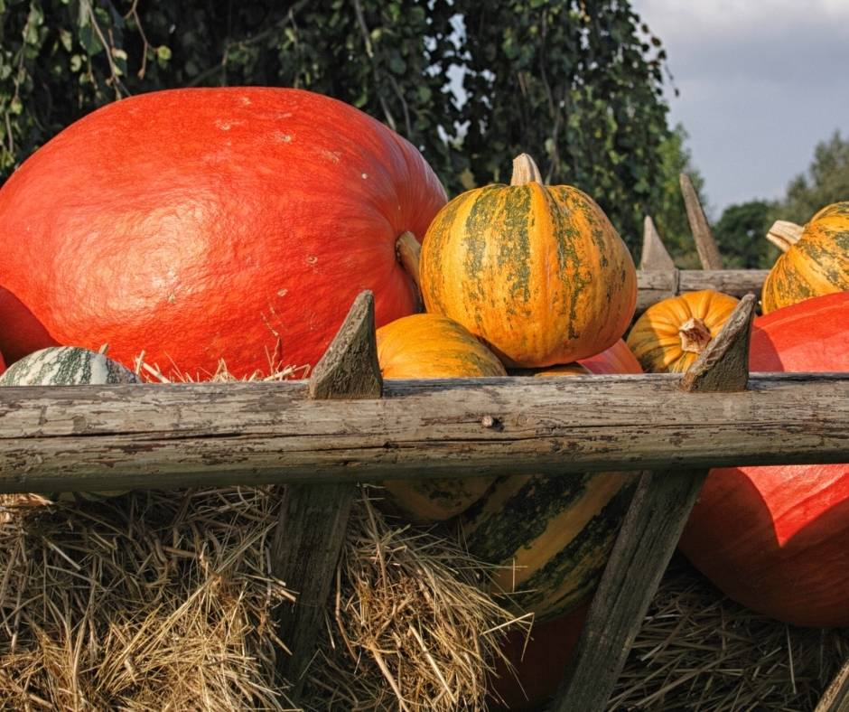 12 Terrific Pumpkin Patches in the Bay Area 4