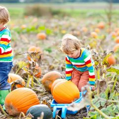 12 Terrific Pumpkin Patches in the Bay Area