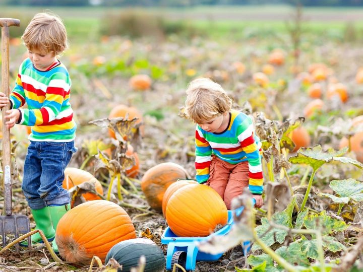 Best Pumpkin Patches in the Bay Area