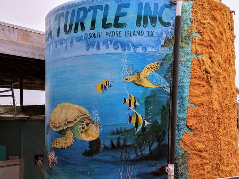 10 Fun Things to Do in South Padre Island 3