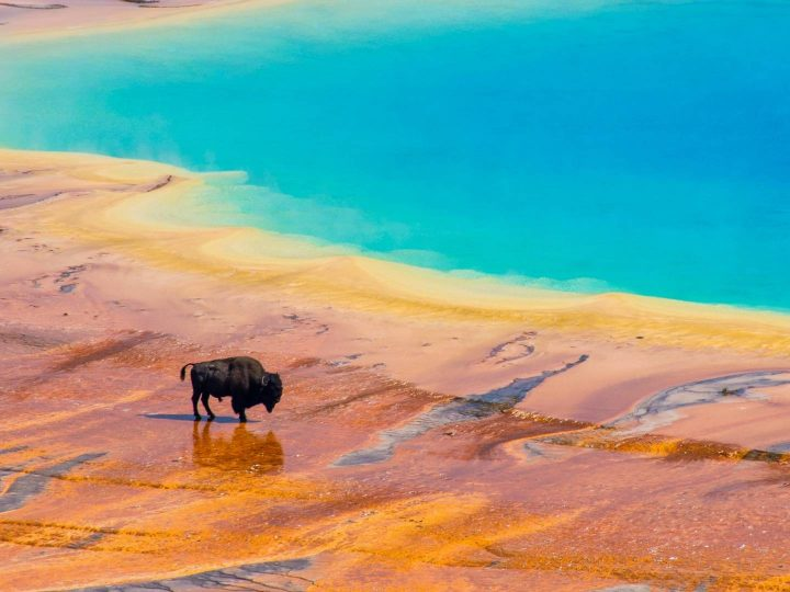 things to do in Yellowstone with kids