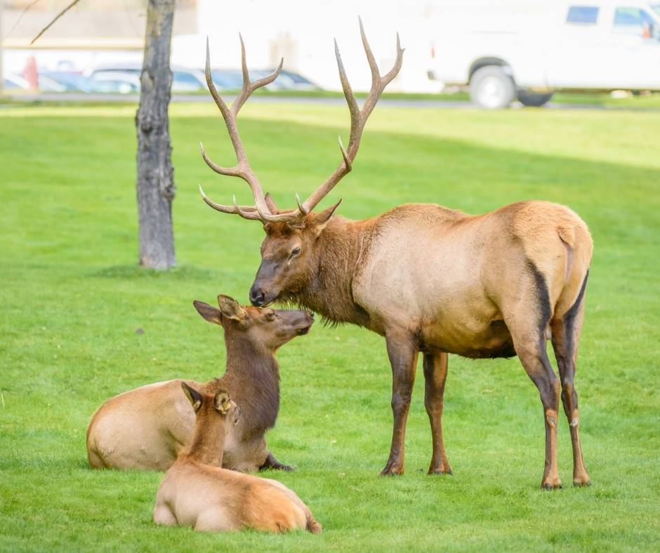 Over 25 Amazing Things to do in Yellowstone with Kids 6