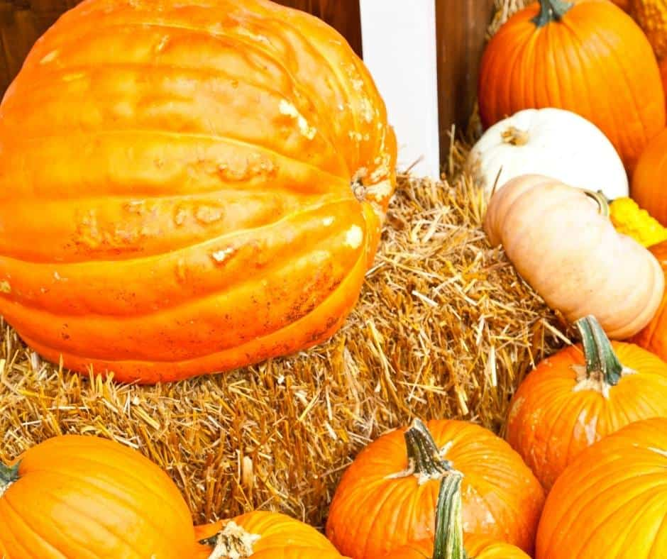 Seasonal Adventures has two Las Vegas pumpkin patch locations