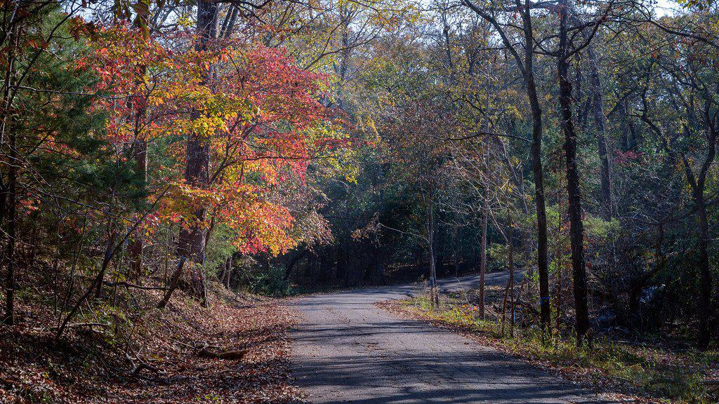 Fall Colors in Texas- 10 Places to See Fall Foliage in Texas 2