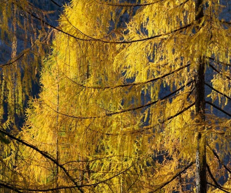 Oregon Fall Colors- 12 Terrific Places to See Oregon Fall Foliage 3