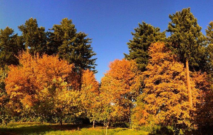 Oregon Fall Colors- 12 Terrific Places to See Oregon Fall Foliage 1