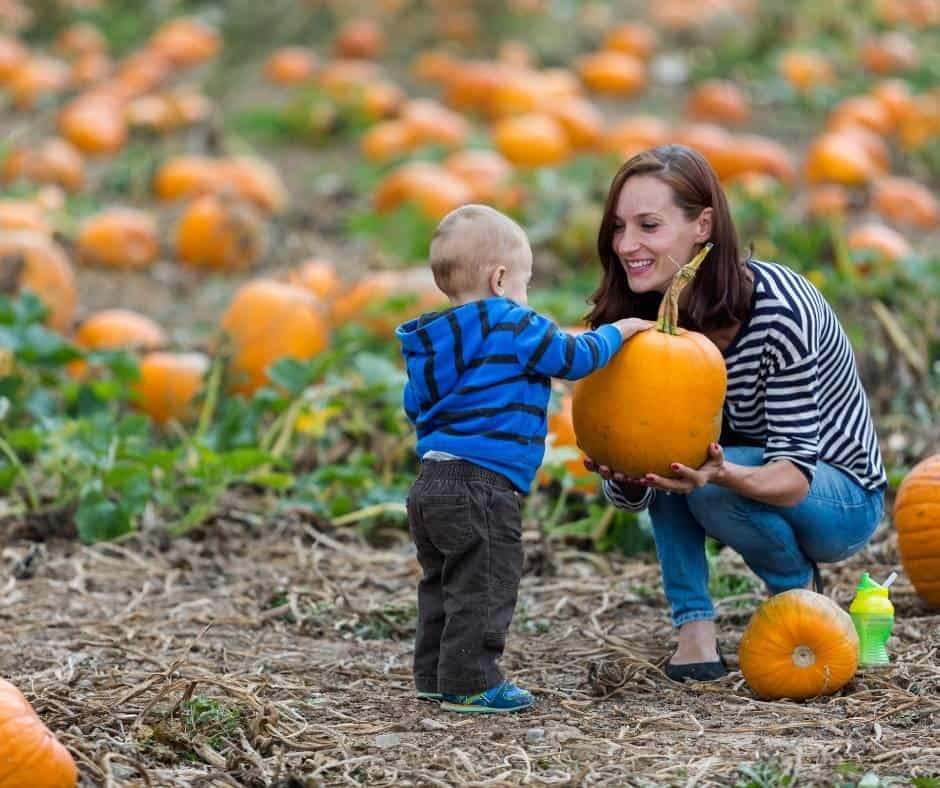 Mountain Valley Ranch has a great pumpkin patch near San Diego