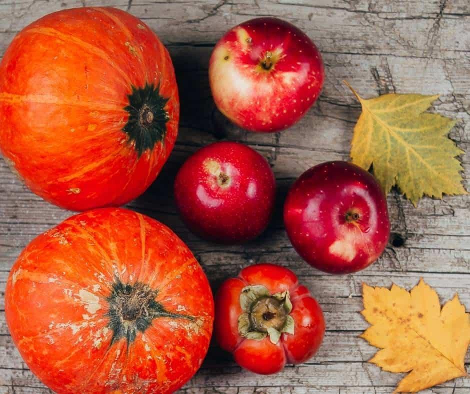 12 Best Pumpkin Patches in San Diego 1