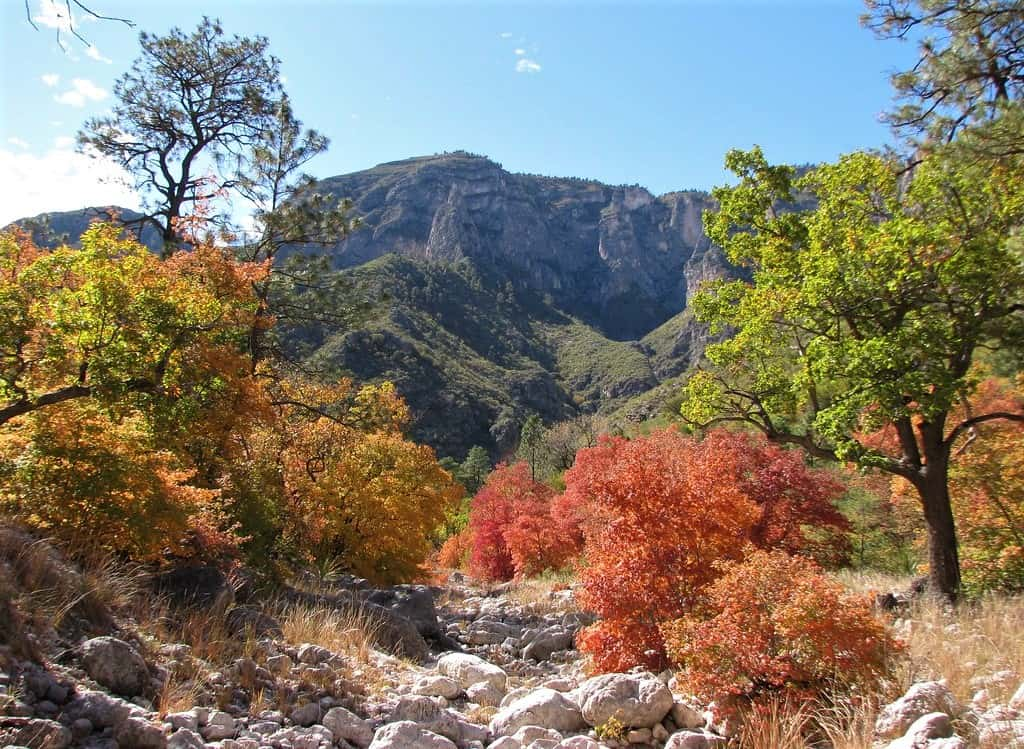McKittrick Canyon in Guadalupe Mountains National Park is a good place to see Texas Fall foliage