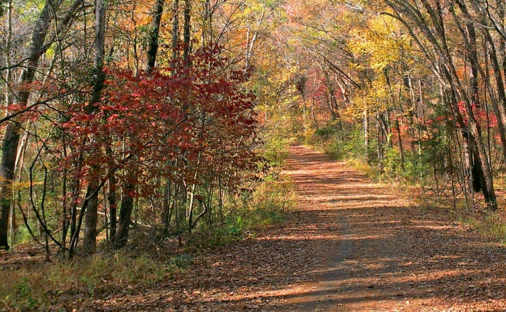 Fall Foliage in Tyler State Park
