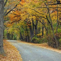 Fall Colors in Texas- 10 Places to See Fall Foliage in Texas