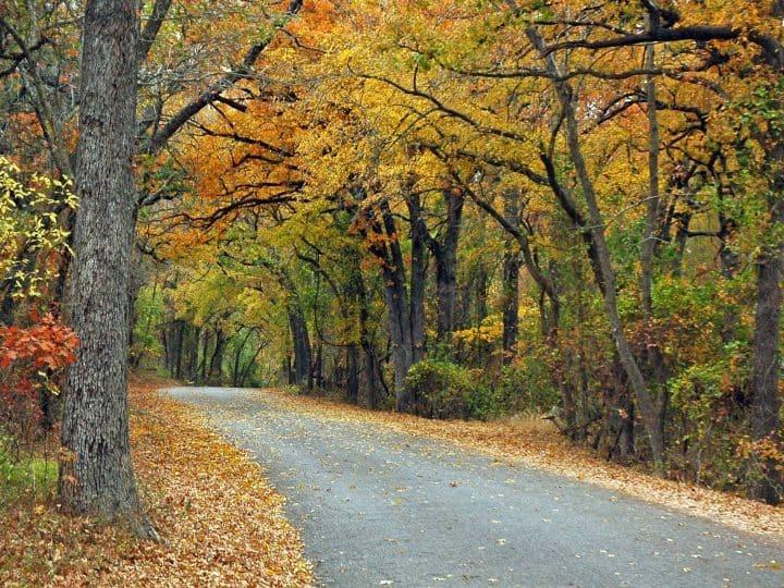 Texas Fall Colors