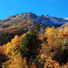Utah Fall Colors- 10 Places to Enjoy Fall Foliage in Utah