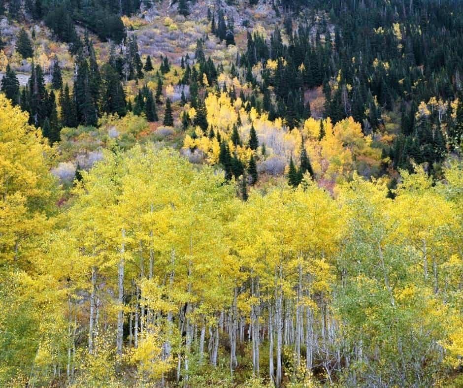 Little Cottonwoods Canyon Utah