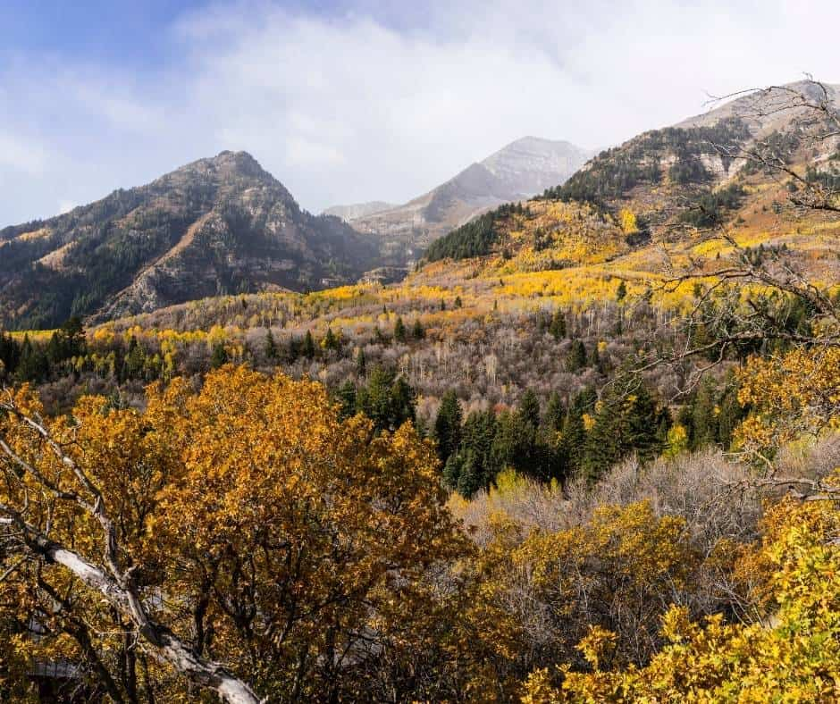 You will find brilliant Utah fall colors along the Alpine Loop