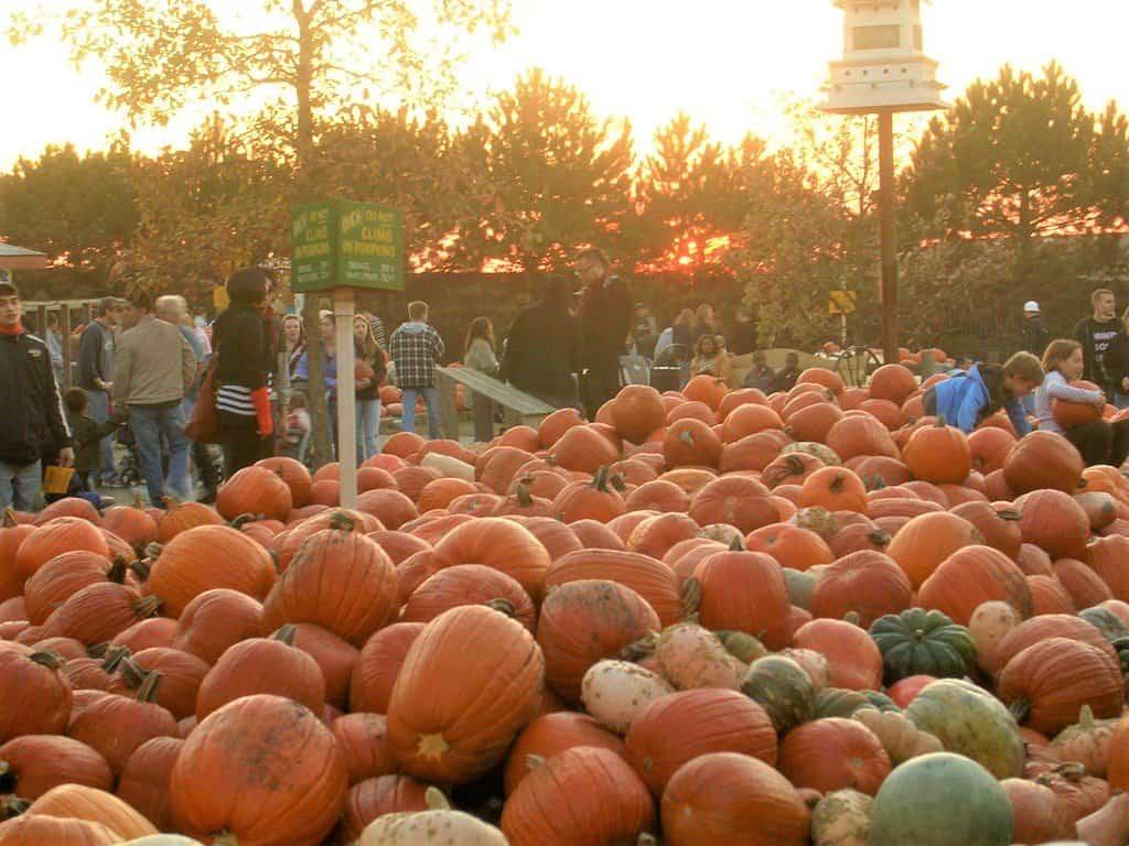 10 Terrific Pumpkin Patches in Chicago 1