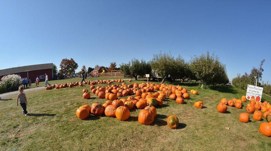 Jonamac Orchard has a fun pumpkin patch near Chicago