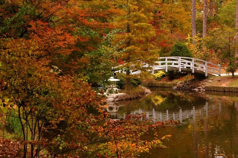 Fall at Duke Gardens is beautiful