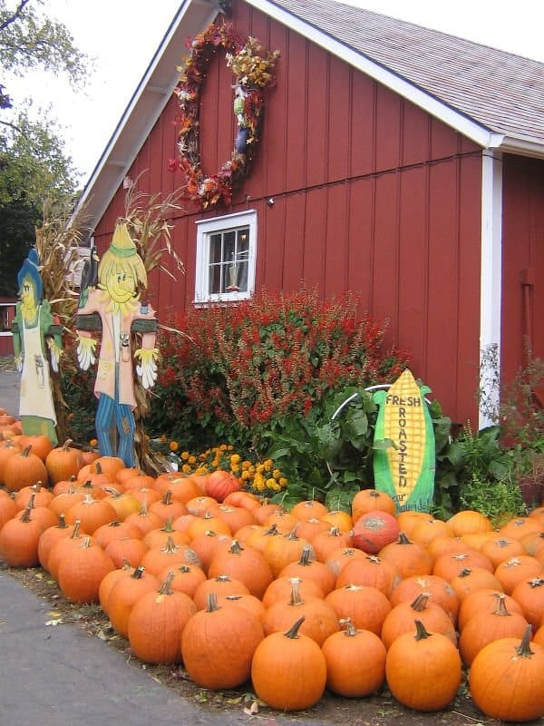 10 Terrific Pumpkin Patches in Chicago 4