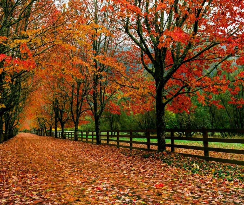 Rockwood Farms is one of the best places to enjoy fall colors in Washington state.