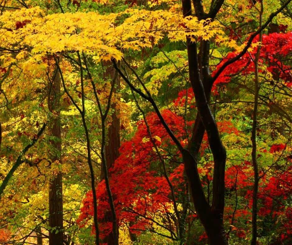 Fall colors in Washington Park Arboretum in Seattle